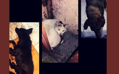 ranne zwierzę – co robić ?