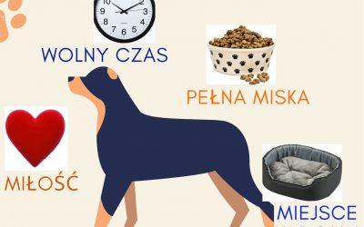 Co jest potrzebne, aby adoptować psa?