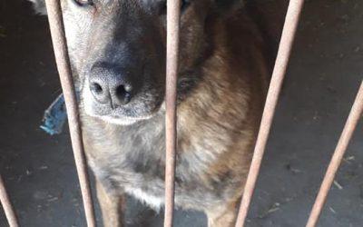 Saba-adoptowana