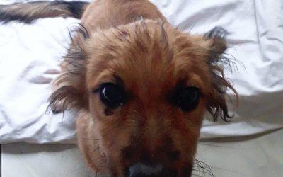 Alvin – adoptowany