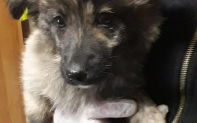 Pola – adoptowana