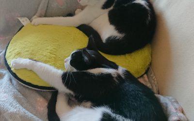 Kocurro i Ptysia pozdrawiają z domu