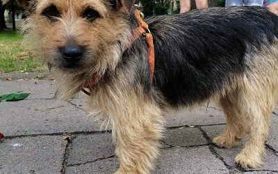 Axel – adoptowany