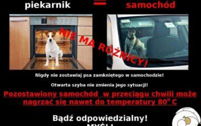 Nie zostawiaj psa samego w aucie !!!