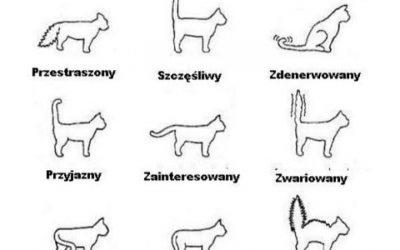 Koci język