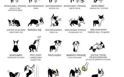 Mowa psa