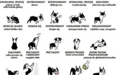 Psi ogon – ważna sprawa