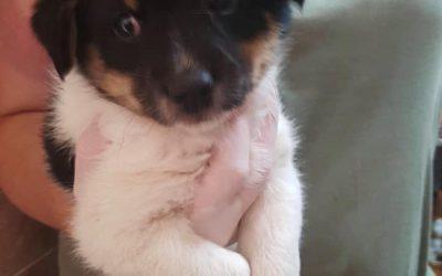 Toto – adoptowana