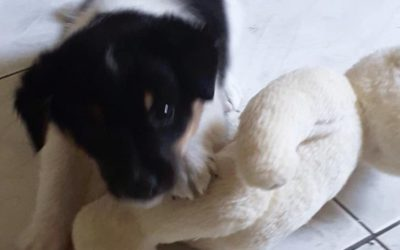 Toto – Adoptowany
