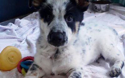 Miro – adoptowany