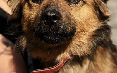 Lenon-adoptowany