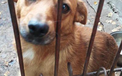 Monty-adoptowany