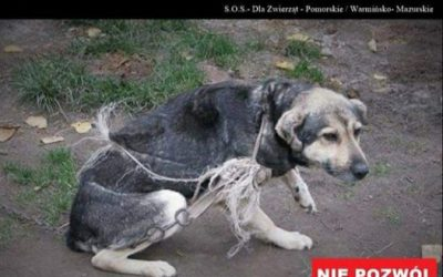 Reaguj, gdy widzisz zaniedbane zwierzę!!!
