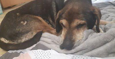 Chester- adoptowany
